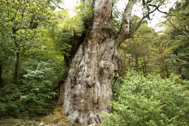 人生で一度はやっておくべき!屋久島の縄文杉トレッキング!