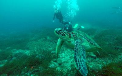 屋久島の秘湯とオススメの観光地